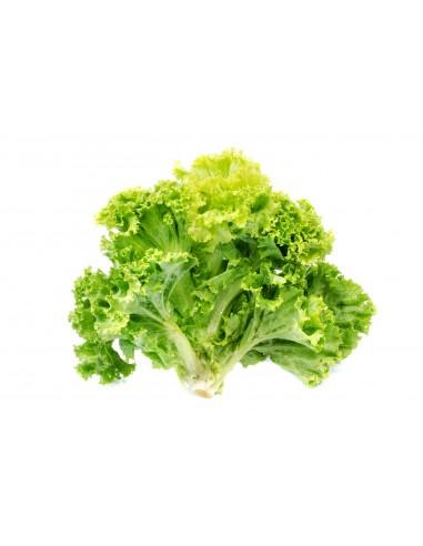 Salade Batavia 生菜 par carton de 12...